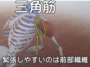 三角筋前部繊維が緊張しやすい