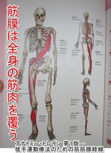 筋膜連鎖アナトミートレインは全身つながっている