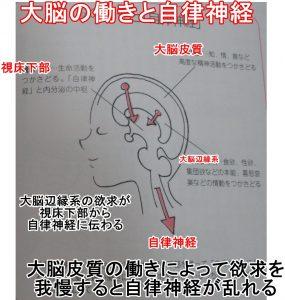 大脳の働きと自律神経