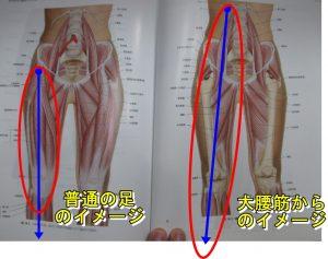 大腰筋からのイメージ
