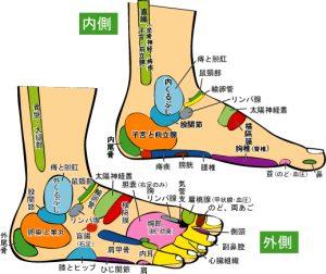 足の反射区