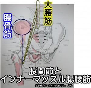 股関節とインナーマッスル腸腰筋