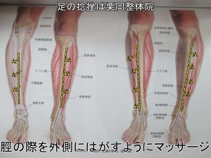 脛の外側をはがすようにマッサージ前脛骨筋