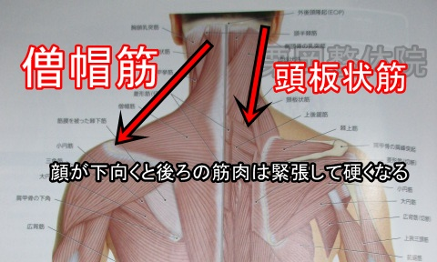 顔が下向くと後ろの筋肉は緊張して硬くなる