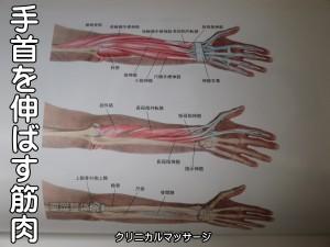 手首を伸ばす筋肉