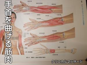 手首を曲げる筋肉
