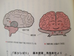 蝶形骨は脳のお皿
