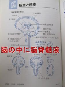 脳せき髄液の循環をよくする