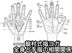 龍村式指ヨガ全身と手指の相関関係