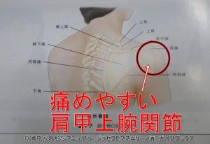 痛めやすい肩甲上腕関節