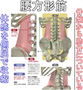 腰方形筋体感を側屈