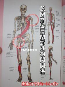股関節と肩関節は相関関係