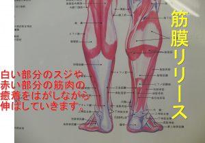下腿ふくらはぎ筋膜リリース
