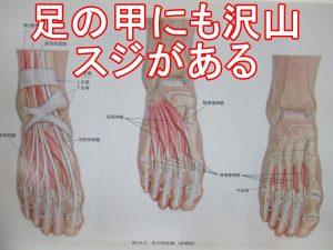 足の甲の腱