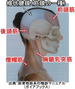 目に影響する頭部頚部の筋肉