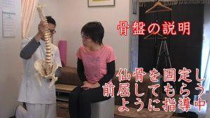 骨盤説明。まずは骨盤に関節がある(仙腸関節)のを知ってもらい、仙骨という骨の動きをつけるために前屈動作してもらうように説明していきます。