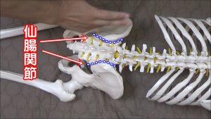 仙腸関節の矯正
