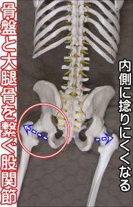 大腿骨と骨盤をつなぐ股関節