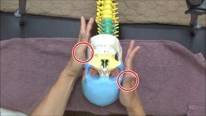 左手は左耳の下あたり、右手は右耳の上辺りを保持